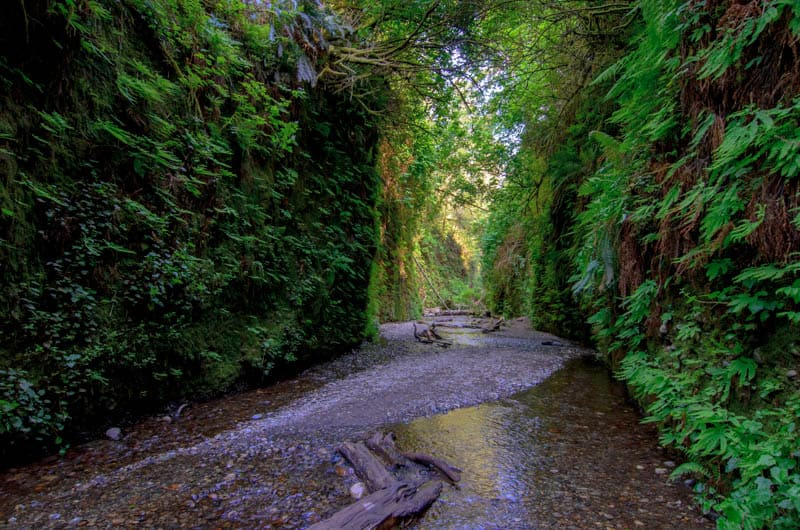 Exploring Fern Canyon in Prairie Creek Redwoods State Park is one of the best things to do in Redwood National Park.