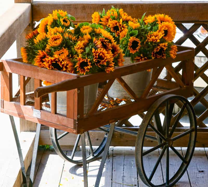 Floral display at Earthbound Farms in Carmel Valley California
