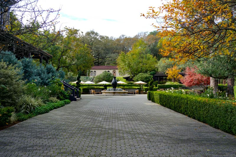 The beautiful driveway at Beringer Vineyards in Napa Valley