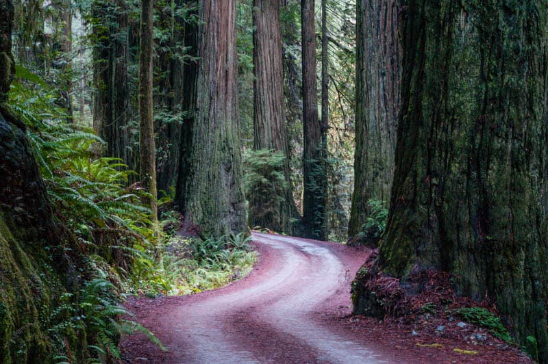 Howland Hill Road in Jedediah Smith Redwoods State Park, California