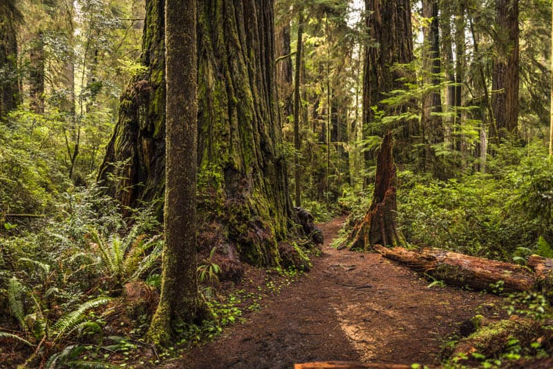 Hiking in Jedediah Smith Redwoods State Park, California