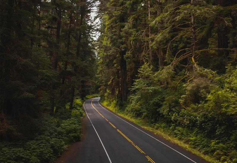 Driving the Newton B. Drury Scenic Parkway in Redwood National and State Parks in California