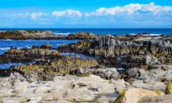 16 Perfect Things to Do in Pacific Grove, California