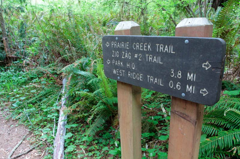 Hiking Prairie Creek Trail in Redwood National and State Parks, California