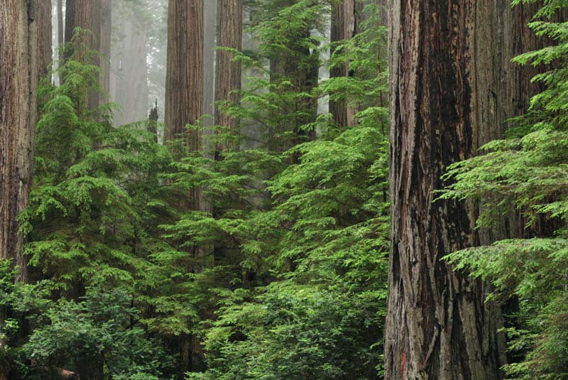 Redwood National and State Parks in California