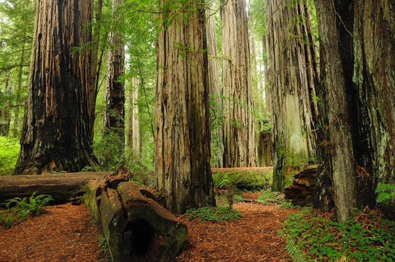 Redwood National and State Parks in Northern California