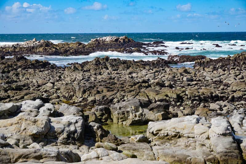 The rocky coastline at Pacific Grove is perfect for tidepooling!
