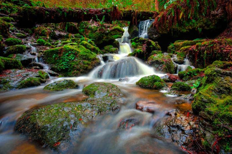 Trillium Falls in Prairie Creek Redwoods State Park