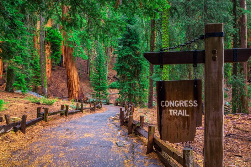 Hiking the Congress Trail is one of the best things to do in Sequoia National Park.