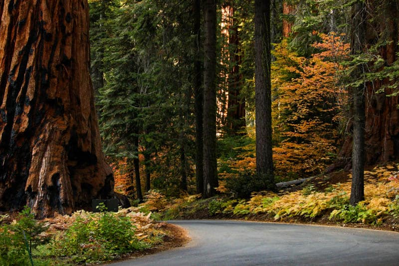 Driving through Sequoia National Park in California in the fall