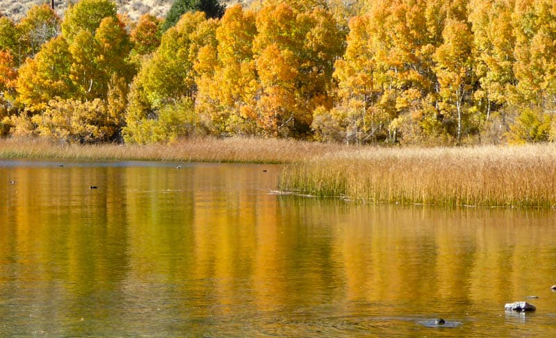 Reflections at Gull Lake in Eastern California, in the fall