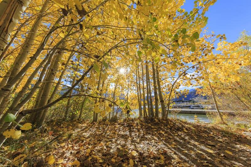 Fall color at Gull Lake in California
