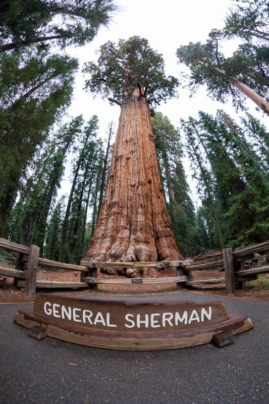 The General Sherman Tree in Sequoia National Park, California