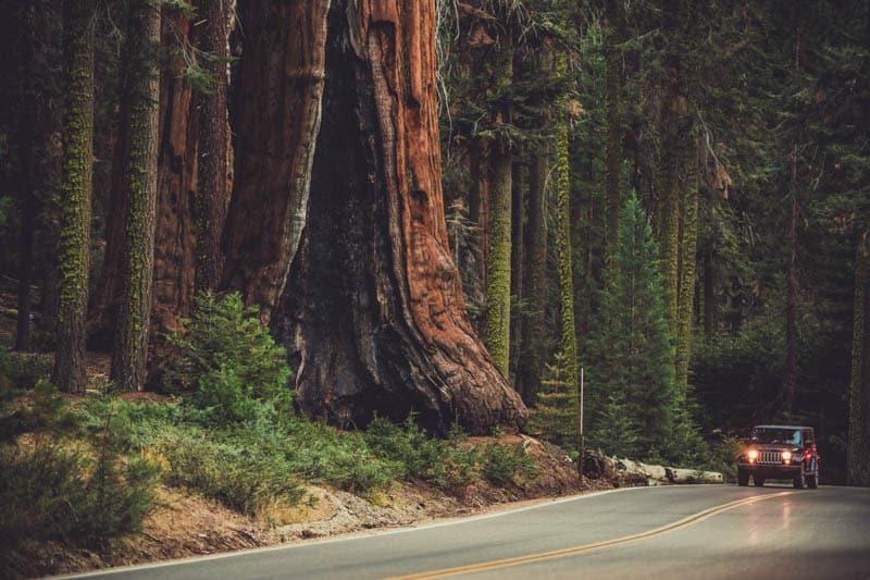 Generals Highway in Sequoia National Park California
