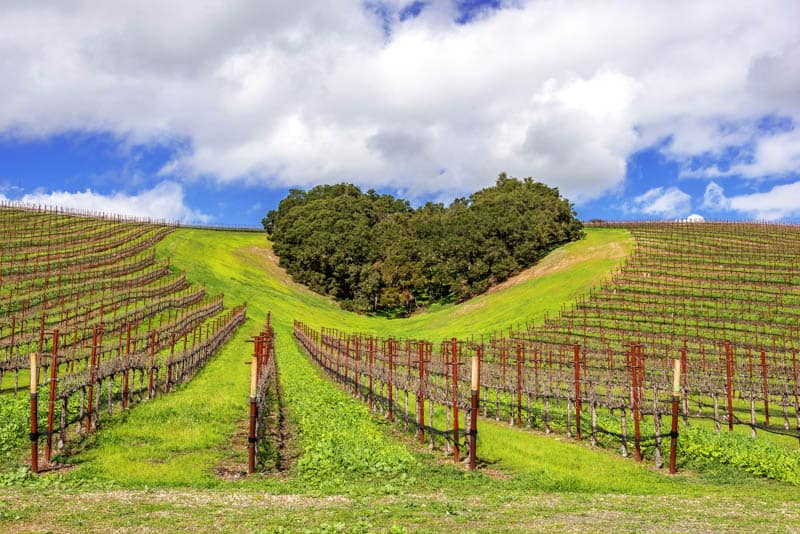 Photographing the heart-shaped copse of trees at Niner Estates is one of the top things to do in Paso Robles.