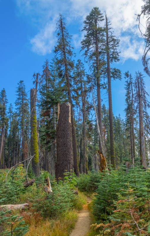 Little Baldy Hike in Sequoia National Park in California