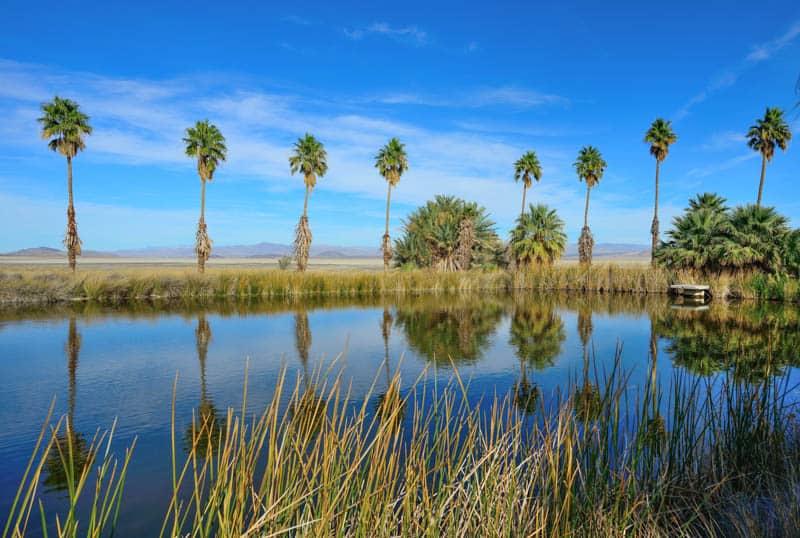 The lake at Zzyzx Road near Baker, California
