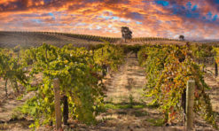 16 Delightful Things to Do in Paso Robles, California!