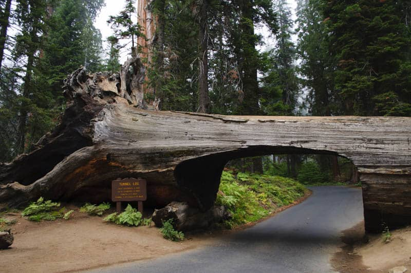 Tunnel Log in Sequoia NP California