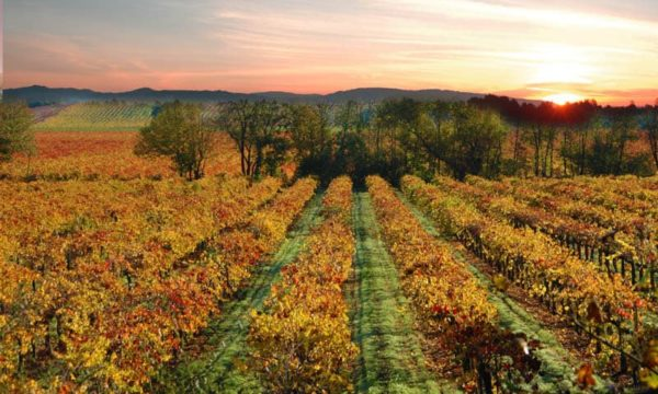 30+ Terrific Things to Do in Sonoma, California