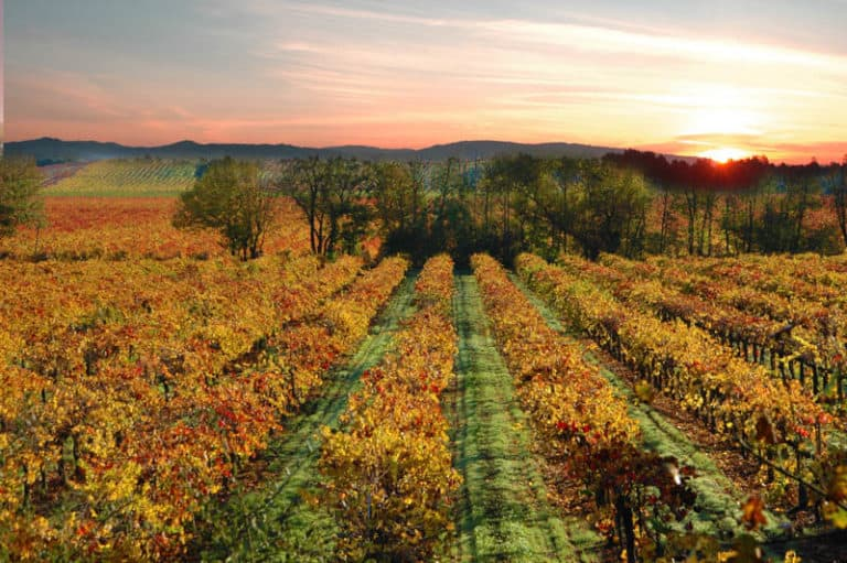 Sonoma is one of the most magical places to visit in California