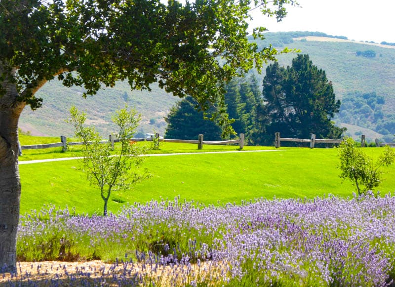 View from the grounds at Carmel Valley Ranch in California