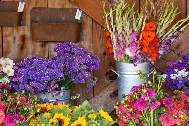 Fresh flowers for sale at Earthbound Farms in Carmel Valley California