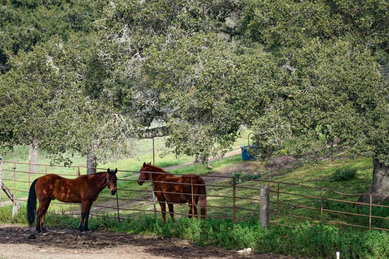 Horses in pasture along Carmel Valley Road in California