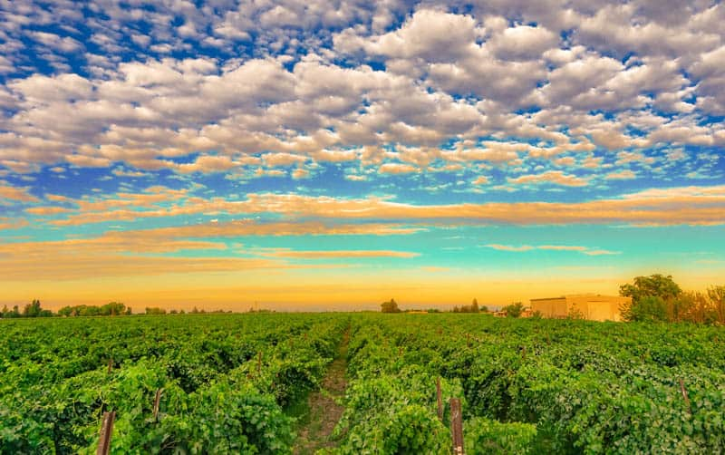 Lodi is one of the must-visit wine regions in California!