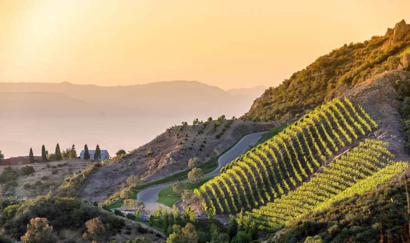 Vineyard in Malibu California