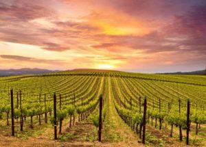 Beautiful Wine Regions in California You Must Visit!