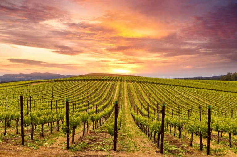 Napa Valley is one of the most beautiful wine regions in California!