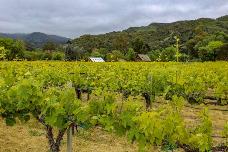 Vineyard in  Carmel Valley California