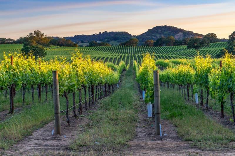 Vineyards in Healdsburg in Sonoma County California