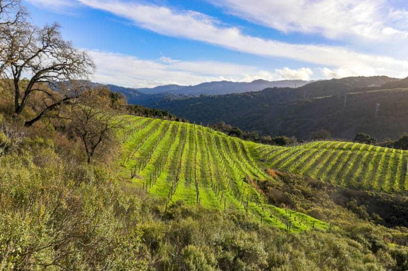 Vineyards in the Santa Cruz Mountains of California