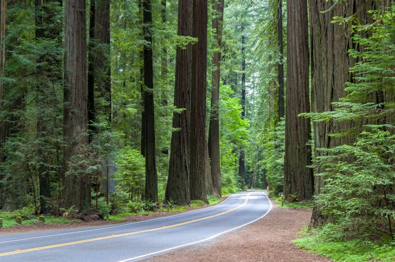 Avenue of the Giants is one of the most scenic drives in Northern California