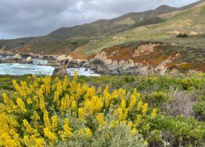 Garrapata State Park Bluff Trail near Carmel-by-the-Sea, California