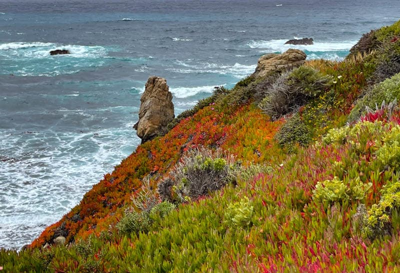 Ice plant on the cliffs by the Pacific Ocean at Garrapata State Park in California: a view from the Bluff Trail.