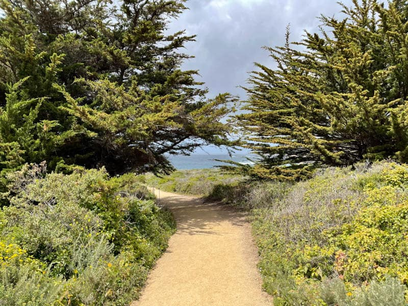 Cypress trees along the Garrapata State Park Bluff Trail in California