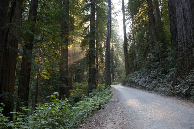 Driving Howland Hill Road through coastal redwoods in California