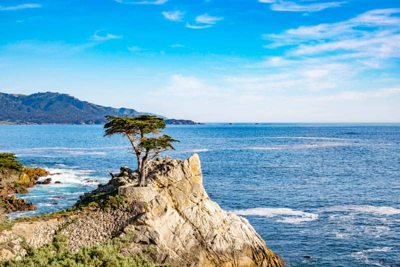 The Lone Cypress is a famous stop along the 17-Mile Drive in California.