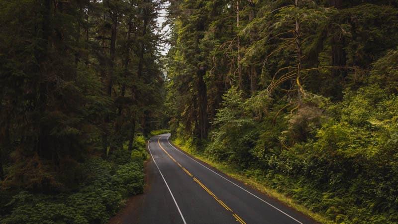 The Newton B Drury Parkway in Prairie Creek Redwoods State Park in Northern California