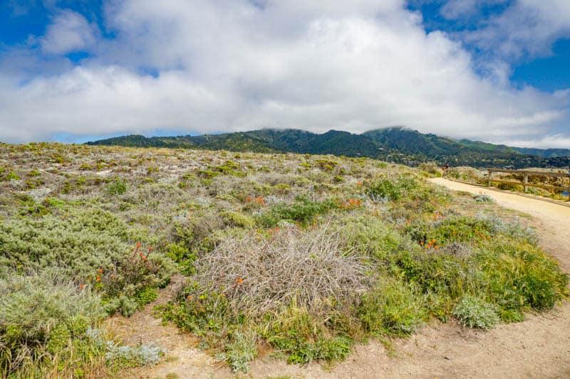 Sand Hill Trail in Point Lobos Park winds past coastal scrub.