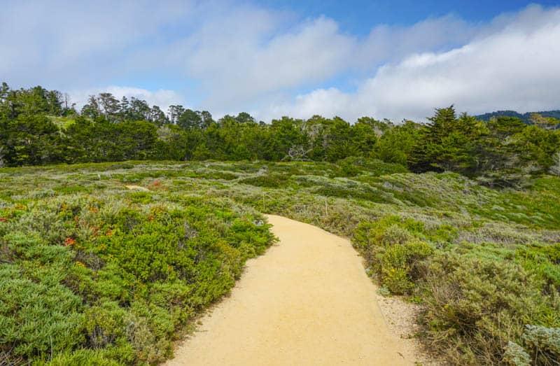 Sand Hill Trail in Point Lobos, California