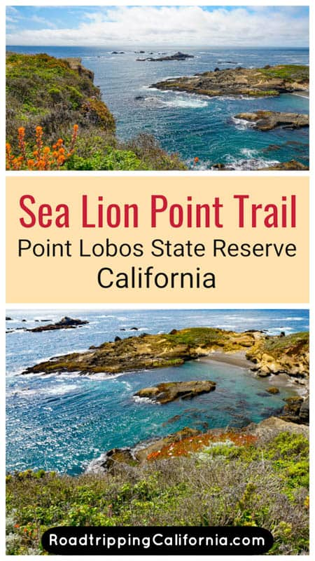 What you will see along the Sea Lion Point Trail and Sand Hill Loop Trail in Point Lobos State Reserve in California. Plus tips for hiking this scenic trail!