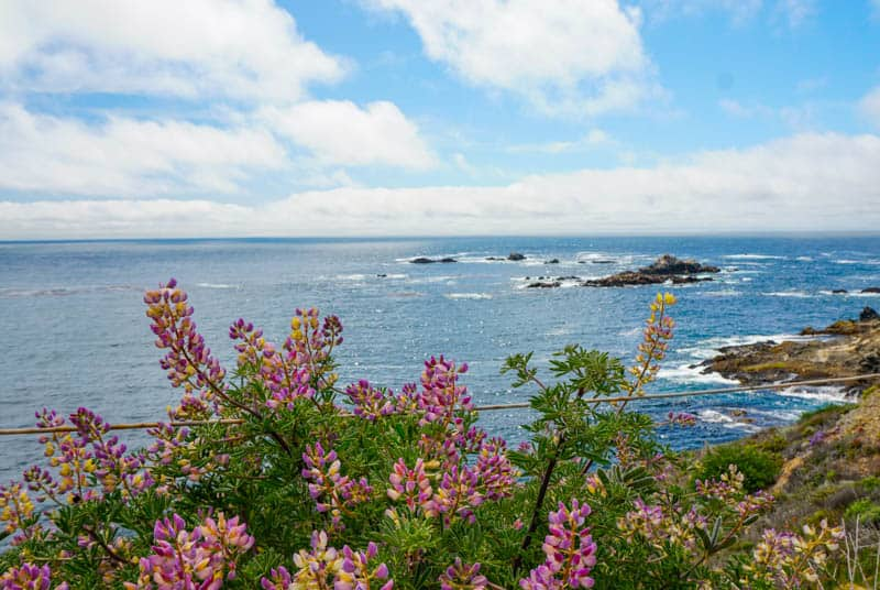 View of Sea Lion Rocks in Point Lobos, California