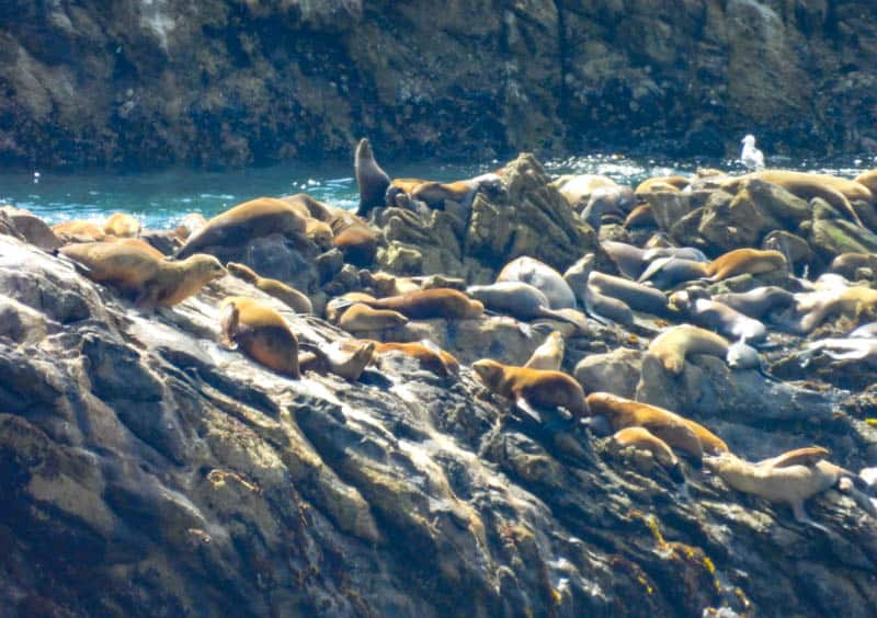 Sea lions at Point Lobos State Natural Reserve in California