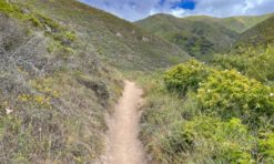 18 Best Hikes in Big Sur, California (+ Tips for Hiking Big Sur)