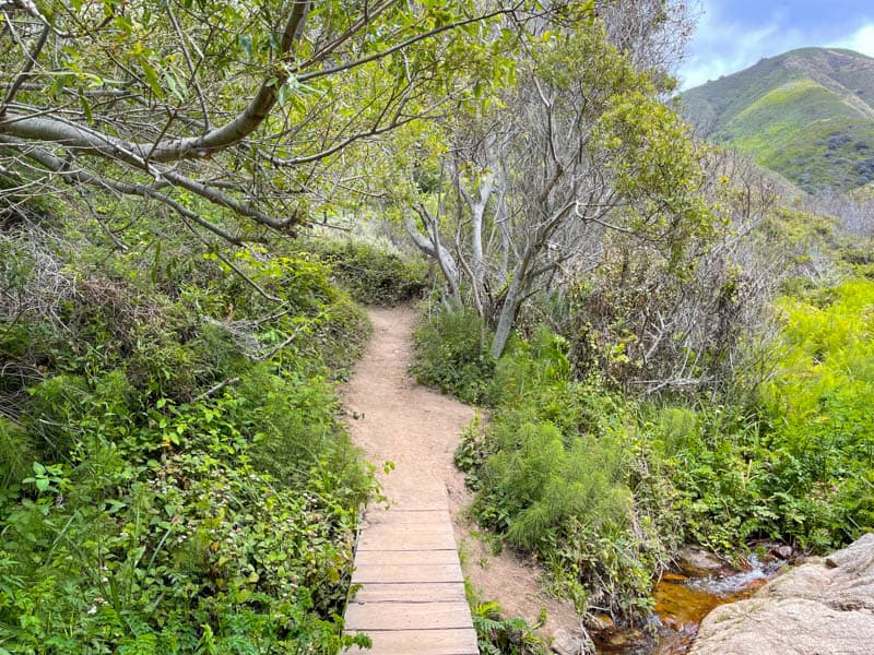 Hiking the gorgeous Soberanes Canyon Trail in Garrapata State Park in Big Sur, California