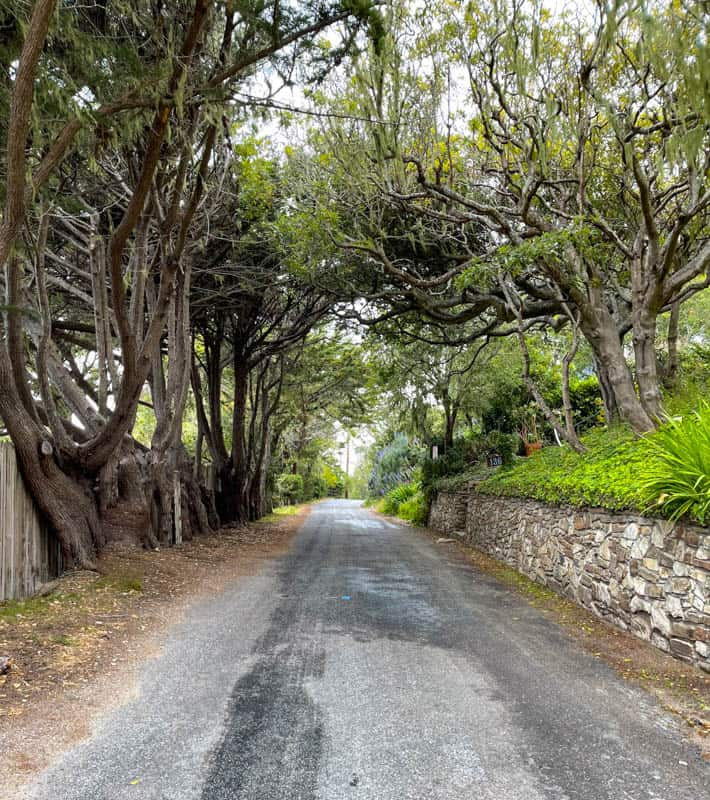 A little tree tunnel on Cypress Way in Carmel Highlnads, California